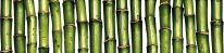 Бордюр Jungle зелёный (JU1C021) 6x25