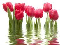Панно Фреш Тюльпаны (из 6ти шт.) 1000х750